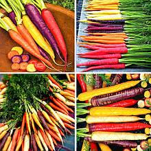 Семена моркови оптом