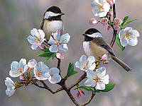 Алмазная вышивка 5D, Весна и птицы, полная выкладка 30*20