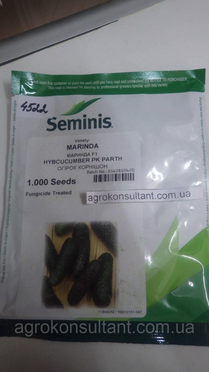 Семена огурца Маринда F1 (Seminis), 1000 семян — партенокарпик, ультраранний гибрид (40-45 дней)