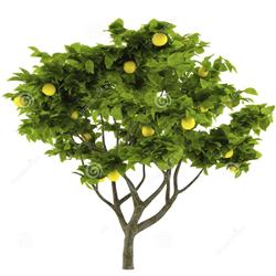 Саженцы деревья, кустарники, цветы
