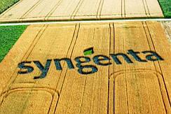 Семена сахарной кукурузы Syngenta