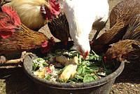 Витамины для птиц: какие выбрать в зимний период?