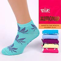 Женские короткие носки. Житомир Talko 2311-12. В упаковке 12 пар.
