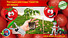 Посадка рассады томатов на грядку