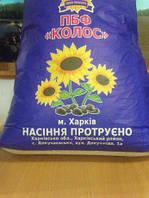 Семена подсолнечника французской селекции (под Гранстар) Рекольд - Экстра