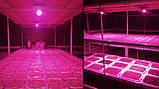 Фитолампа GrowStar 50W 7 Band Spectrum . Grow LED Lamp 50W ., фото 9