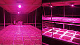 Фитолампа GrowStar 50W. Grow LED Lamp 50W Full Spectrum 380-840 nm., фото 9