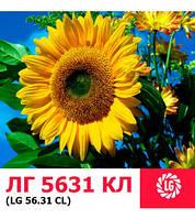Семена подсолнечника ЛГ 5631 КЛ (Limagrain/Лимагрейн)