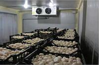 Холодильная камера для грибов