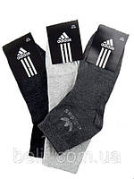 Носки мужские, средние, 12 пар (серый/чёрн/тем/серый) , 42-45, Ad
