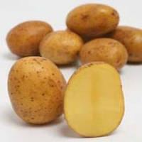 Картофель Аннушка сетка 3кг.