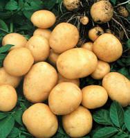 Картофель Гранада 3кг, фото 1