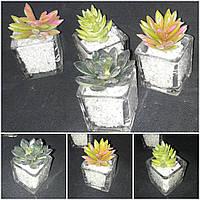 Суккуленты в стеклянной вазочке 8-10 см 40\30 (цена за 1 шт +10 грн)