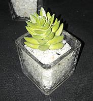 Суккуленты искусственные в стеклянной вазочке 8-10 см 40\30 (цена за 1 шт +10 грн)