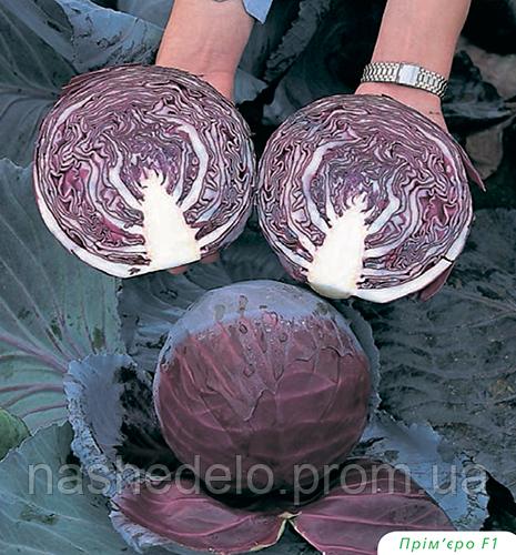 Семена капусты к/к Примьеро F1 2500 семян Bejo