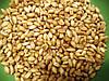 """Зерно пшеница белая (органика) 80% (200г) посевное ФГ """"Костив"""""""