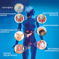 Эндокринология и иммунология