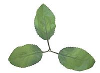Лист под розу тройной А-228 (200 шт. в упаковке)