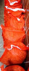 Цибуля саджанка (тиканка) димка