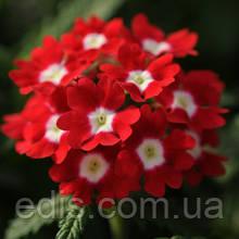 Вербена гибридная Красная 0,1 г, семена Яскрава