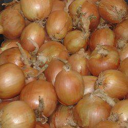 Семена лука репчатого Тамара F1 (10 000 сем.) Bejo