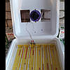 Автоматический инкубатор Рябушка Смарт турбо 48 яиц цифровой, фото 5