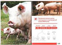 Концентрат Пуріна® для ремонтних свинок 15% вагою від 20кг до 125кг