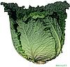 Семена капусты савойской Мелиса F1 2500 семян Bejo