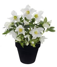 Саджанці багаторічних квітів та трав