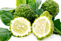 Лайм Кафрский, Хистрикс (Kaffir Lime, Citrus hystrix) Комнатный
