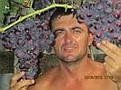 Саженцы и черенки винограда от Роменского Николая