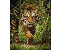 Картина по номерам Роспись на холсте Король джунглей КНО4043 (в коробке)