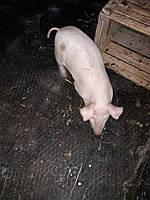 Резиновая плитка для сельского хозяйства, фото 1