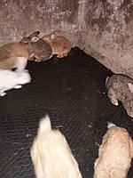 Резиновая плитка для кролятника