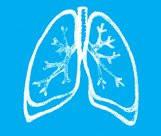 Дыхательная система.