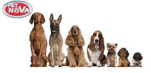 Товары для собак Pet Nova