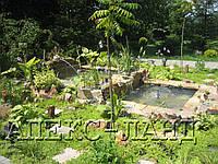 Стоительство декоративных водоемов. Цена с учетом материалов и оборудования:, фото 1