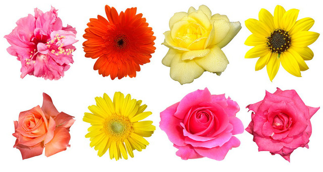 Пресс-цветки
