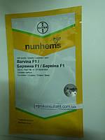 Семена огурца Барвина F1 (Nunhems) 500 семян — партенокарпик, ранний гибрид (40-45 дней), фото 1