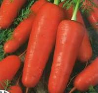 Семена моркови Талисман ,10 гр, MoravoSeeds (Моравосид), Чехия