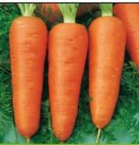 Семена Морковь Кампино 0,5 кг Satimex