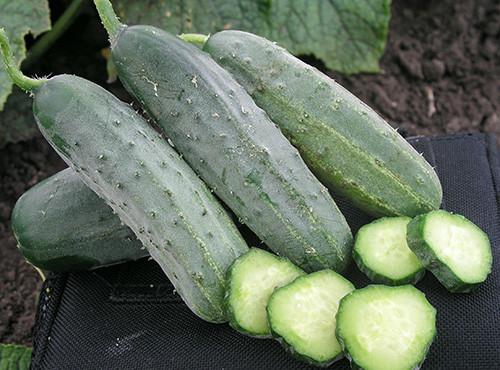 Семена Огурец Гектор F1 1000 семян (Nunhems)