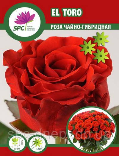 Роза чайно-гибридная EL Toro