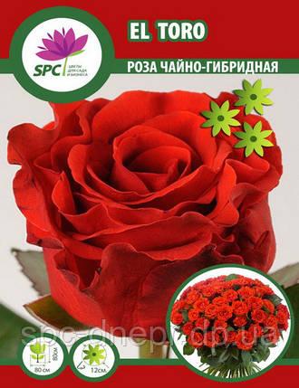 Роза чайно-гибридная EL Toro, фото 2
