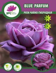 Роза чайно-гибридная Blue Parfum
