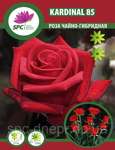 Роза чайно-гибридная Kardinal 85