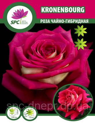 Роза чайно-гибридная Kronenbourg, фото 2
