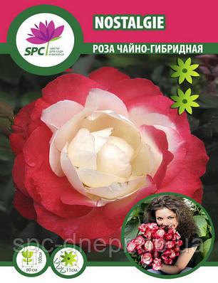 Роза чайно-гибридная Nostalgie , фото 2