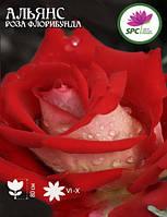 Роза чайно-гибридная Alliance