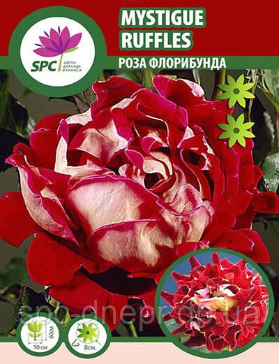 Роза флорибунда Mystique Ruffles